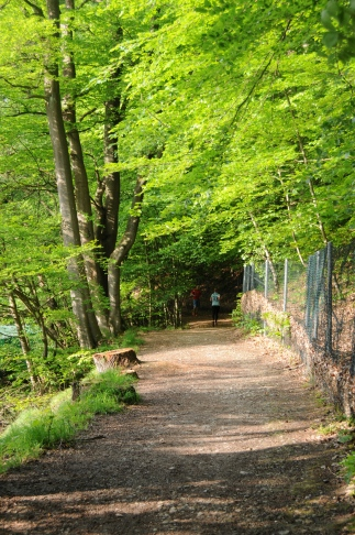 The woodland walk just 5 minutes from our flat!